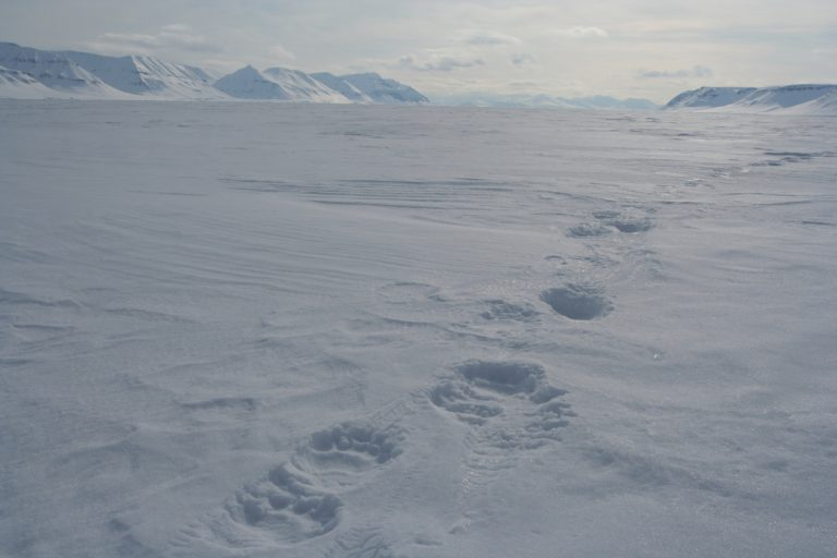 Arctic, Arktis, Svalbard, Spitzbergen, Billefjord, Polarbear, Eisbär, Ice, Eis, Snow, Schnee, Hans-Joachim Eggert