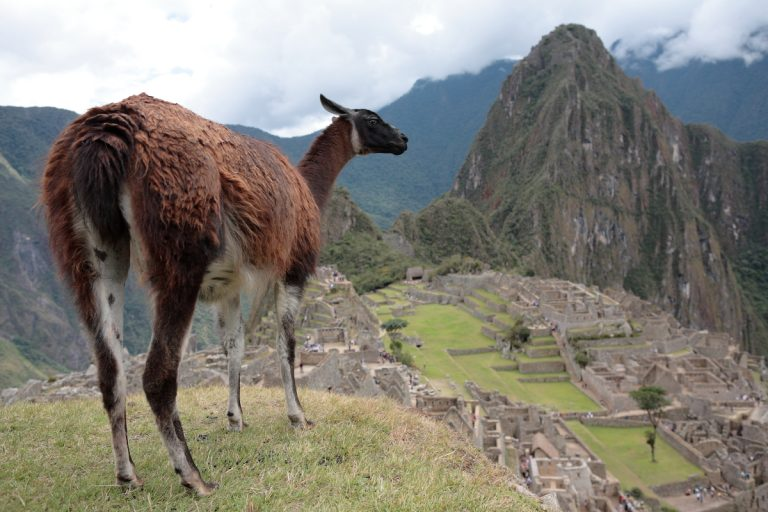 South America, Südamerika, Peru, Machu Picchu, Lama, Mountain, Berg, Valley, Tal, Hans-Joachim Eggert