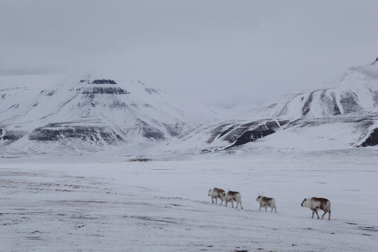 Arctic, Arktis, Svalbard, Spitzbergen, Adventdalen, Rendeer, Rentier, Valley, Tal, Mountain, Berg, Ice, Eis, Snow, Schnee, Hans-Joachim Eggert