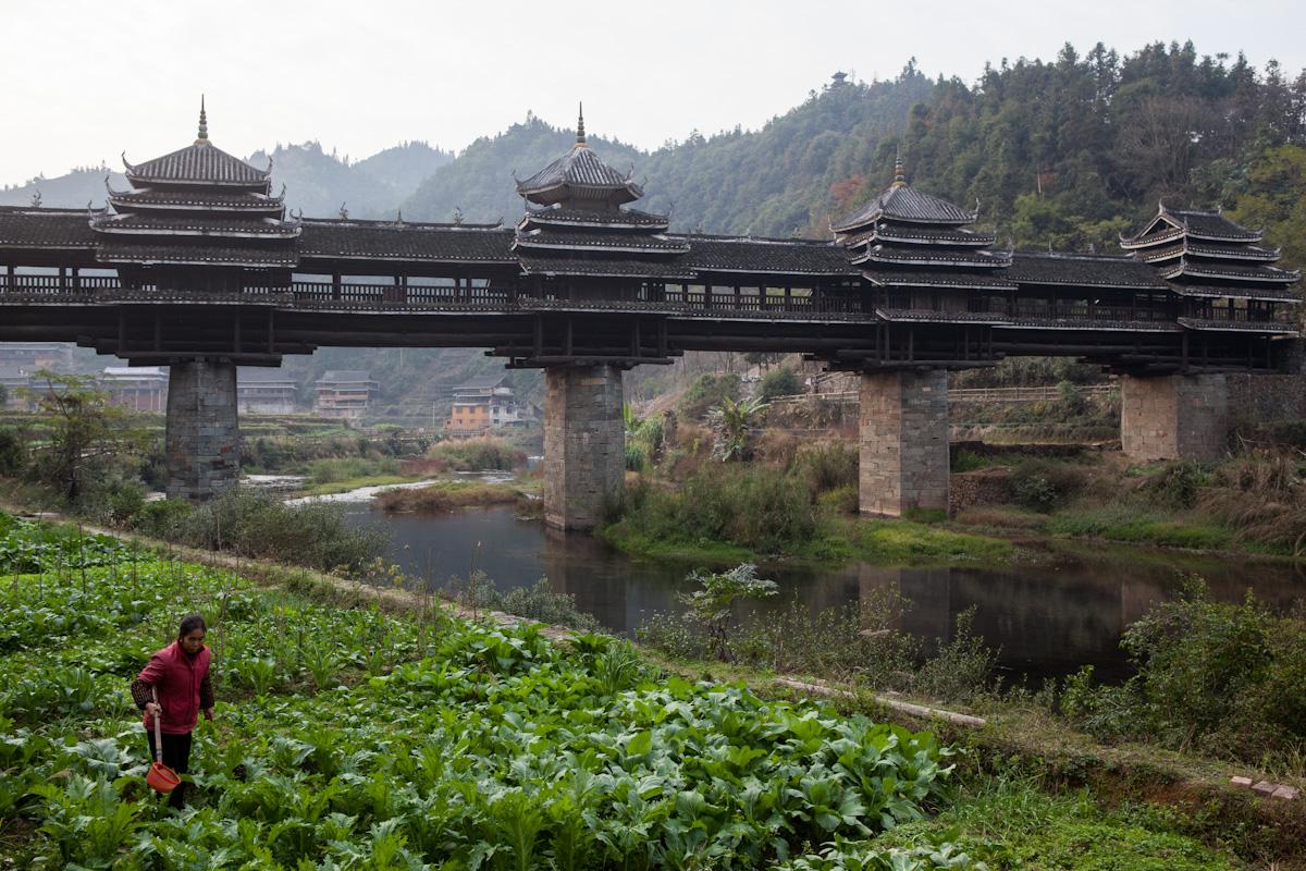 Eine Frau bewirtschaftet ihr Feld an der Yongji Wind- und Regenbrücke in Chengyang. Der Ort besteht aus insgesamt acht Dörfern, die Brücke ist über 60 Meter lang und gehört zur Architektur der Dong-Minderheit. Chengyang - Guangxi - China