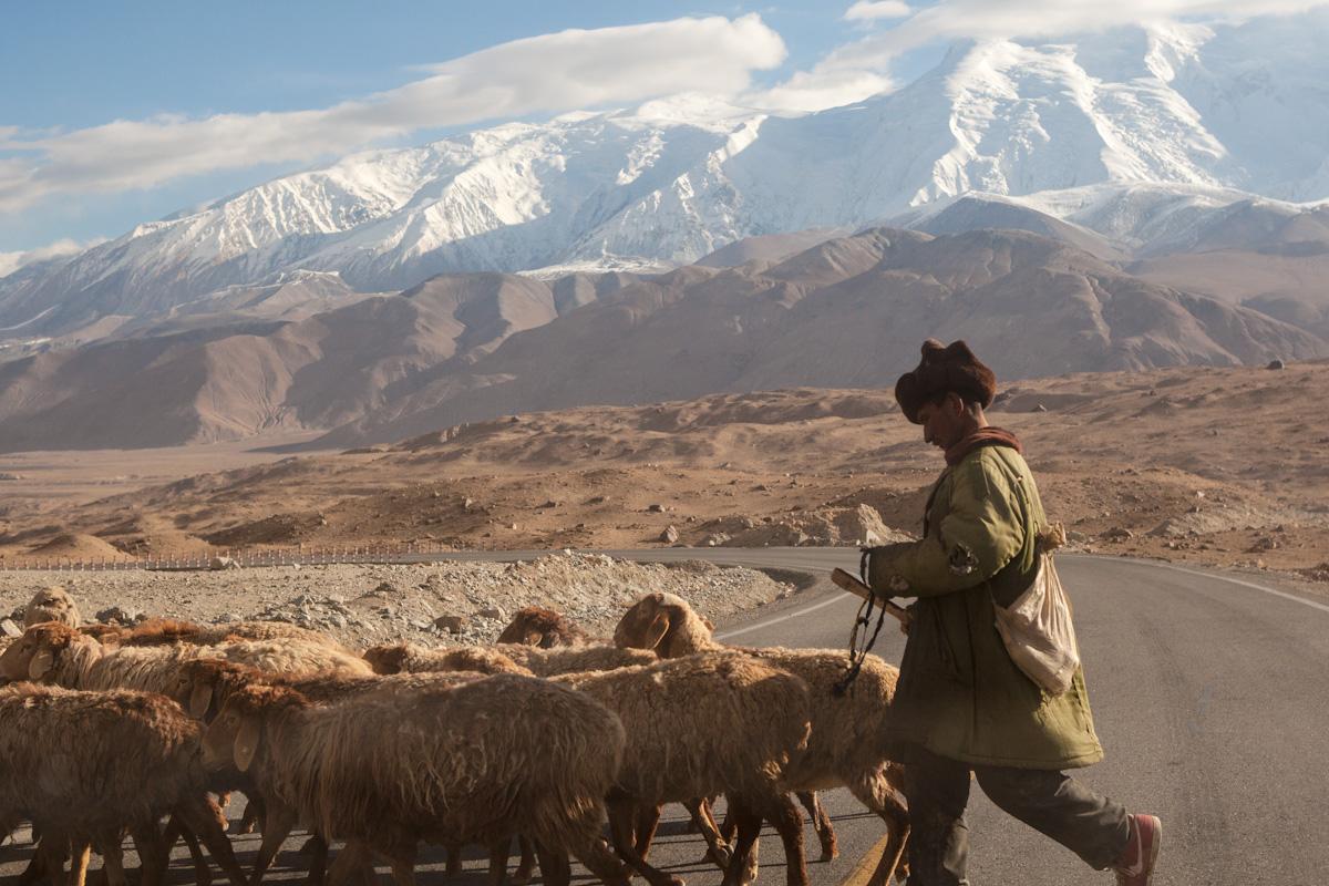Ein Schäfer treibt seine Herde im Karakorum Gebirge, in der Umgebung von Tashkurgan, über den Karakorum-Highway. Tashkurgan - Xinjiang- China