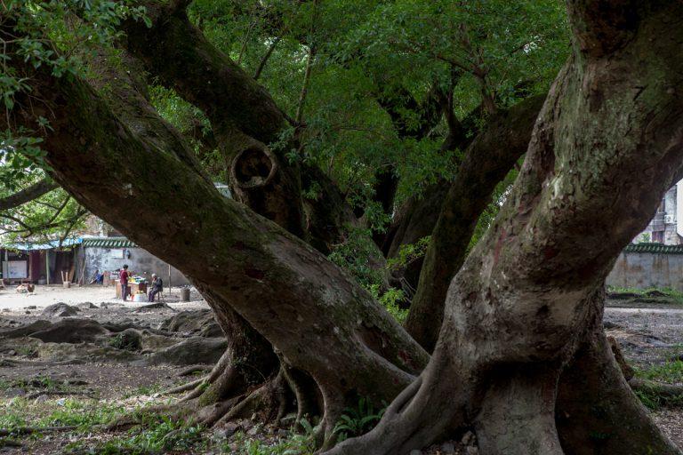 Waldlandschaften im südostchinesischen Dorf Yangjiaxi. Fujian - China