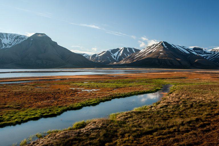 arktis arctic spitzbergen svalbard adventdalen adventtal summer sommer tundra flowers