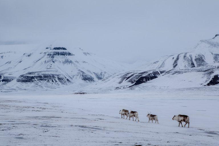 Arctic Arktis Svalbard Spitzbergen Adventdalen Advetntal Rendeer Rentier Valley Tal Mountain Berg Ice Eis Snow Schnee