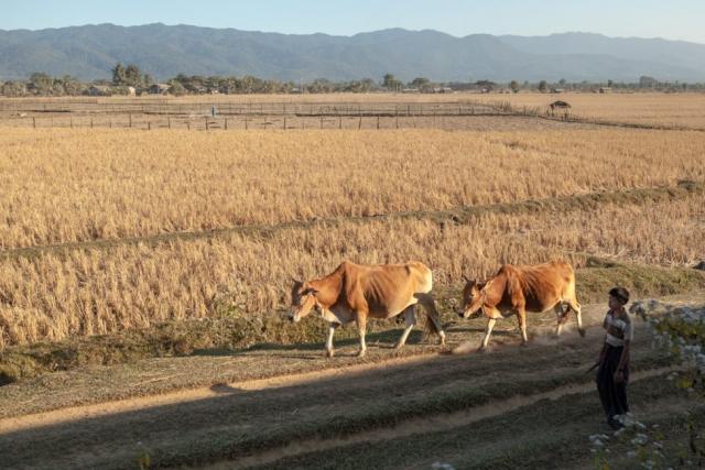 Asien Asia Myanmar Burma Birma Mandalay Myitkyina Zug Train mawlu sagaing-region