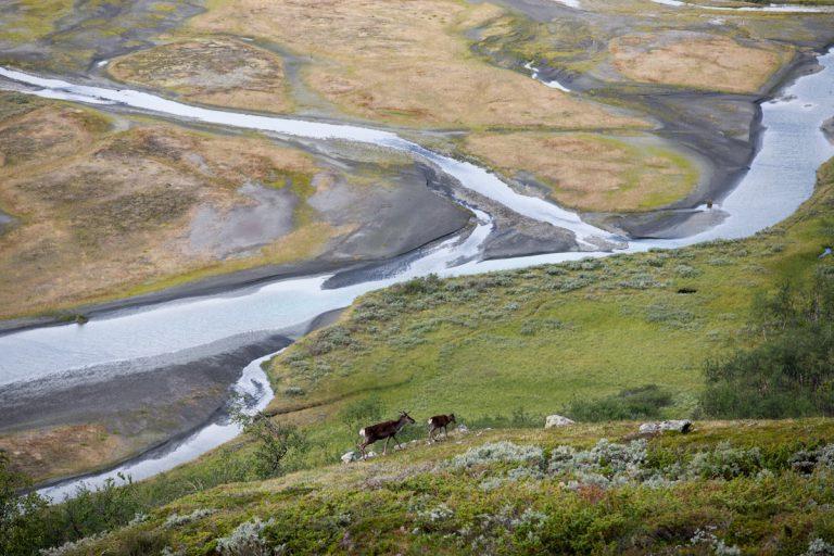 Skandinavien Scandinavia Schweden Sweden Sarek Nationalpark Wanderung Blick vom Sjielmagiedde Rentiere Fluss Fluß Rahpajåhkå